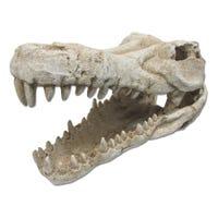 URS Crocodile Skull Fish Ornament - Extra Large