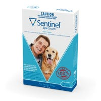 Sentinel Flea And Worming Chews Large Dog 22kg+ - 3pk