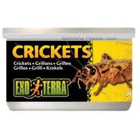 Exo Terra Crickets Small Reptile Food - 34g