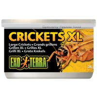 Exo Terra Crickets XLarge Reptile Food - 34g
