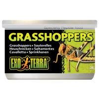 Exo Terra Wild Grasshopper Male Reptile Food - 34g