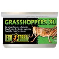 Exo Terra Wild Grasshopper XL Reptile Food - 34g