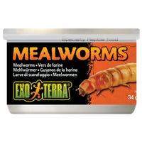 Exo Terra Mealworms Reptile Food - 34g