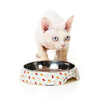 FuzzYard Sushi Delight Cat Bowl - Each