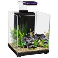 Aqua One Betta Sanctuary Black Fish Tank - 10L